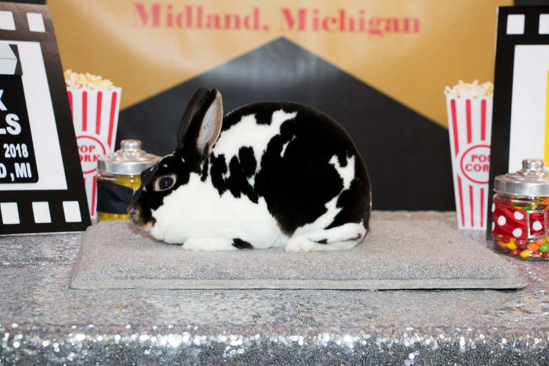 23 Best Review 2019 Mini Rex Nationals Overview with 2019 Mini Rex Nationals